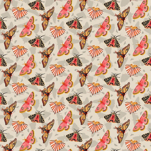 Coral moths