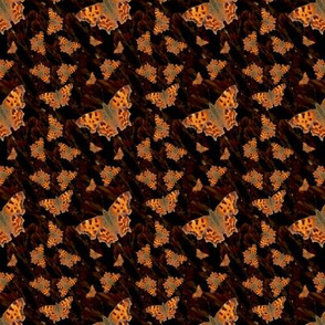 Animal Print orange Moth