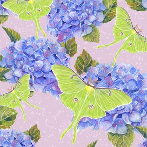 Luna Moths and Hydrangeas