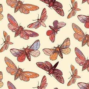 Earthy Moths