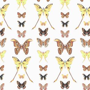 Moth Entomology