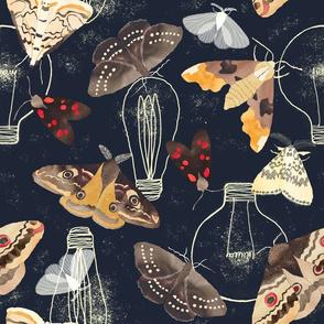 Moths and lights
