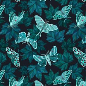 moths in the night