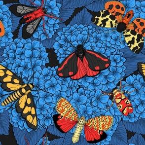 Moths on blue hydrangea flowers