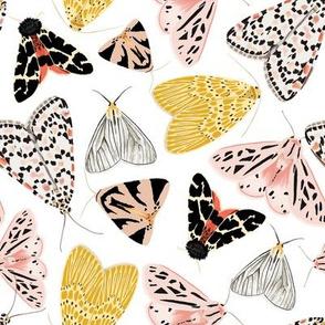 Moth's beauty