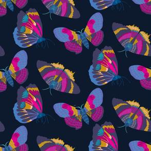 Colourful Moths