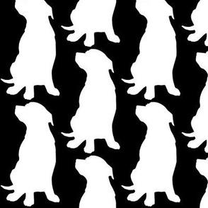 My Dog Murphy, BLACK, Pitbull, American Staffordshire Terrier