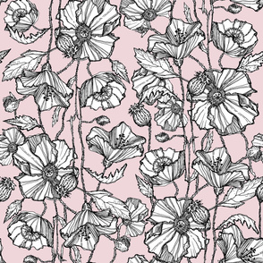 Hand-Drawn Poppies in Pale Pink
