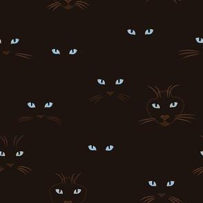 Cats Eyes at Night