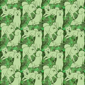 Laua'e Breezeley (Poison Ivy)