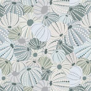 Sea Urchin Shells Neutral