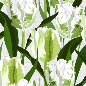parrot tulips white - large scale