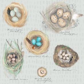 nature journal: cozy bird nests in pebble grey