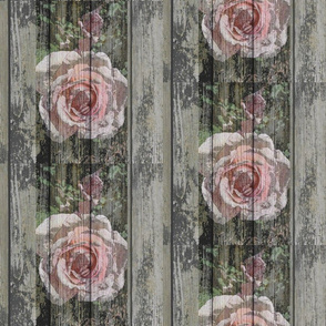 Rose on a Fence