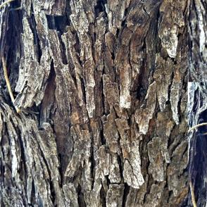 Mesquite Bark