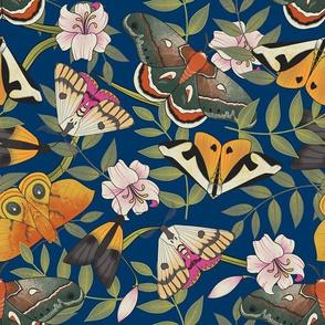 Royal Moths Blue