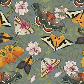 Royal Moths Grey