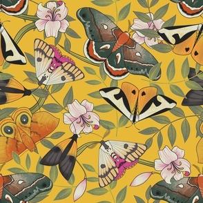 Royal Moths Yellow