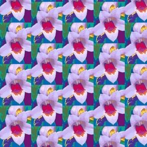 Flower Pow