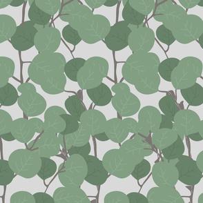 eucalyptus_1_seaml_stock