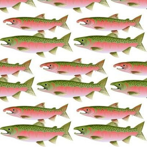 Pacific Coho Salmon
