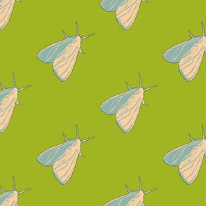 Little Moth Summer