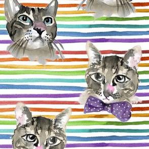 Kitten Cats Watercolor Painted on Rainbows