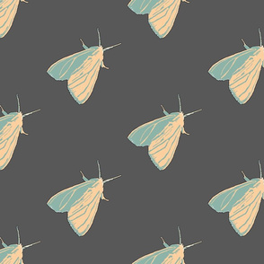 Little Moth Winter Pop