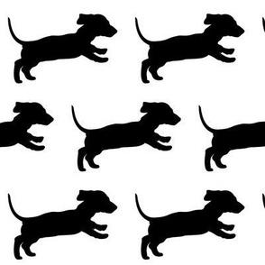 Running Dachschund Puppy - white