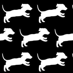 Running Dachschund Puppy - black