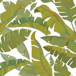 Banana Leaves white background