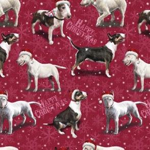 The Christmas English Bull Terrier Dog