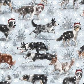 The Christmas Border Collie Dog