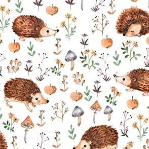 hedgehog dreamland