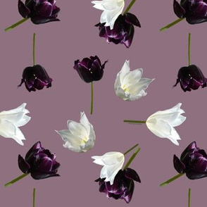 White and Purple Tulips on Moody Plum