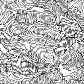 Banana Leaf | Black and White