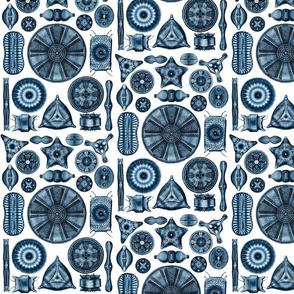 Ernst Haeckel Diatomea Diatoms in Blue