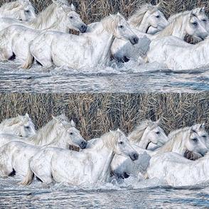 Horsesinwater