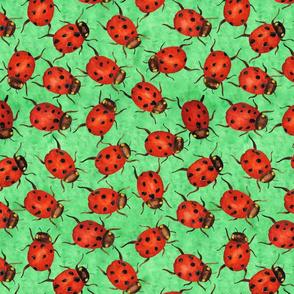 Small Ladybirds