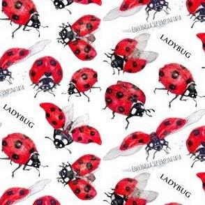 Ladybugs Examined