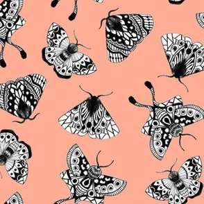 Moths V.02 - Coral