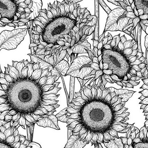 Sunflowers in black and white, small size