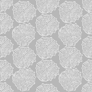 Bumpy Sea Urchin in Grey and White