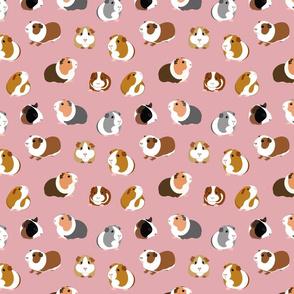 Guinea Pigs on Pink - medium scale