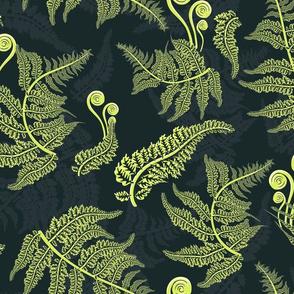 fern leaves botanical