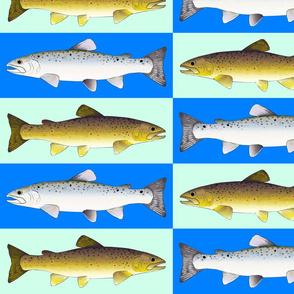 sea run and stream brown trout