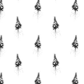 Petra Bonny Lupines 2 bloem Z W