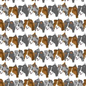 Shetland Sheepdog portrait pack