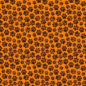 Black Paws on Orange