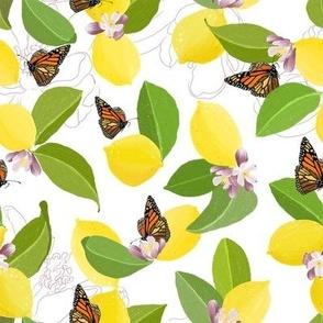 Meyer Lemons and Monarch Butterflies